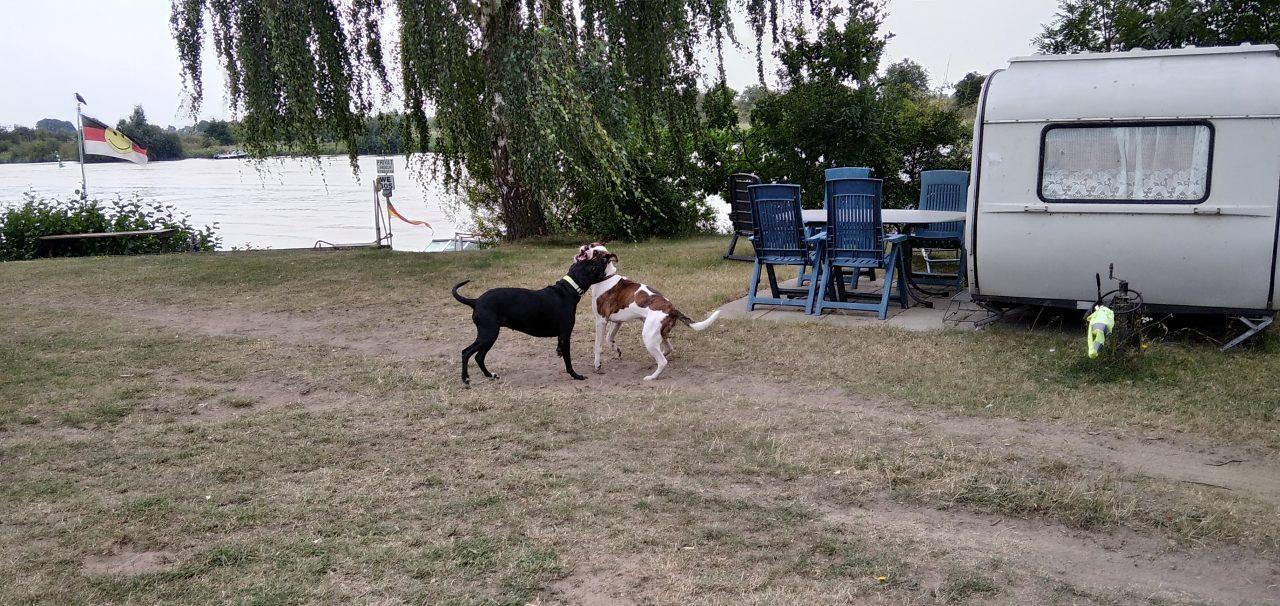 Weser Camping-Bollen: Hundefreundlich